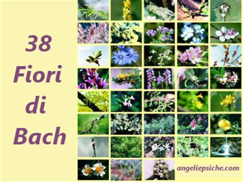i 38 fiori di bach fiori di bach 38 fiori utilizzati per curare la salute