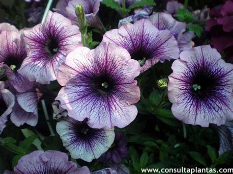 imagenes de flores aztecas ruscus aculeatus o rusco cuidados