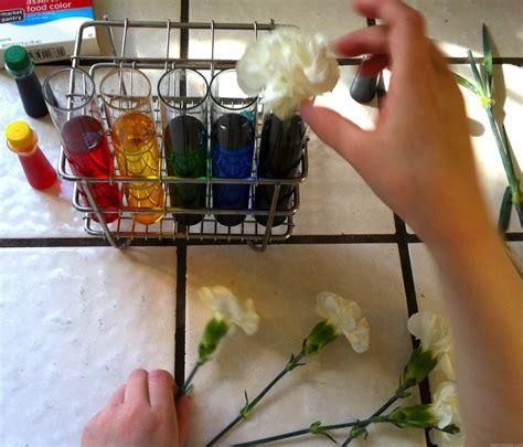 color changing carnations color changing carnations paint cut paste kindergarten
