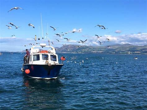 sea fishing boat trips anglesey starida puffin island cruises sea fishing trips