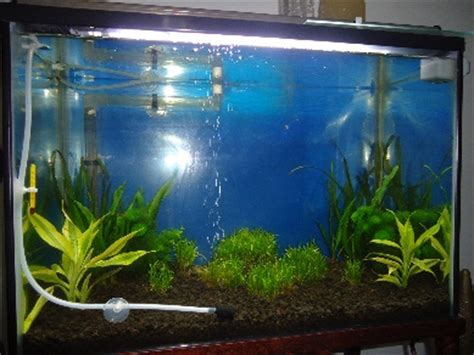 cara membuat aquascape sederhana untuk pemula cara membuat aquascape ikan discus aquascape