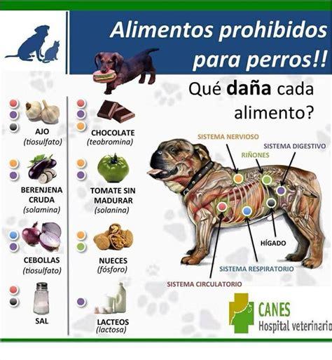 alimentos prohibidos  perros medicamentos  mascotas pinterest