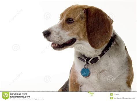 puppy profile puppy profile royalty free stock images image 1058859