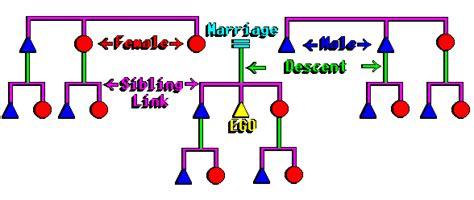 kinship chart maker kin diagrams