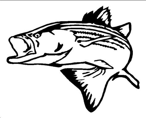 coloring pages rockfish stripe bass clipart clipground