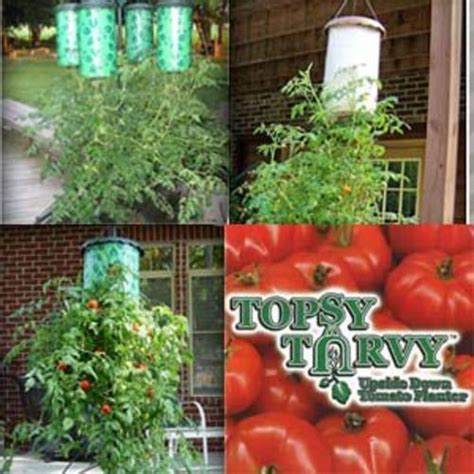 topsy turvy tomato planter items topsy turvy tomato planter was sold for r75 00 on 23 jul at 14