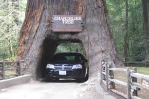 Chandelier Redwood Tree Drive Thru Tree Adventures Of A Couchsurfer