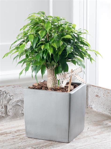 beautiful house plants stylish potted plants from the house beautiful collection