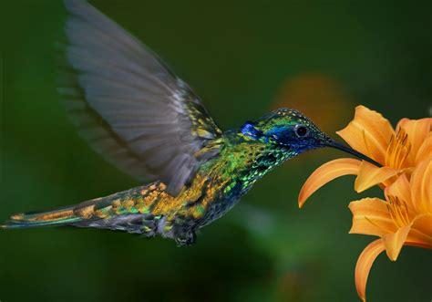 image gallery kolibri