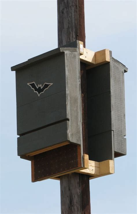 where to put bat house 25 best ideas about bat box on pinterest bat box plans what do mosquitoes eat and