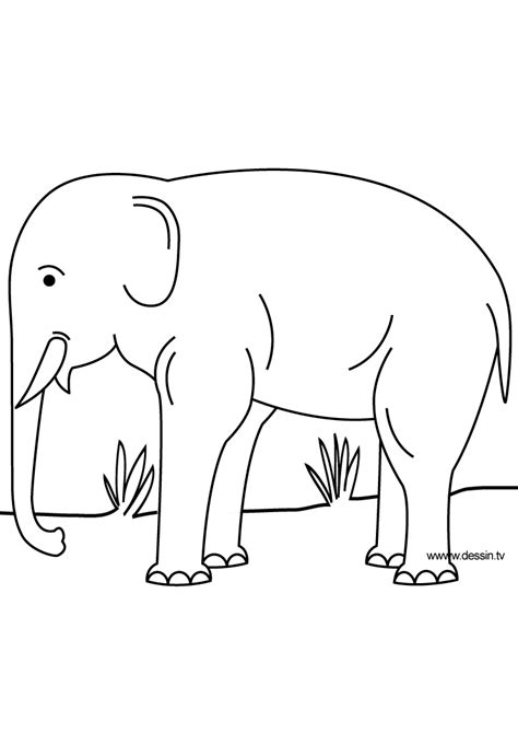 asian elephant coloring page asian elephant coloring page