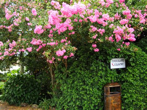 australia flaxton area flowering bushes 01 images frompo
