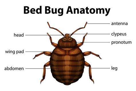 can you feel bed bugs crawl on you how to get rid of bed bugs the ultimate guide on how to