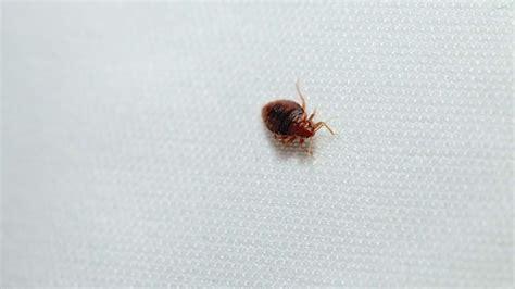 bed bugs philadelphia philadelphia s deep and tumultuous battle with the bedbug