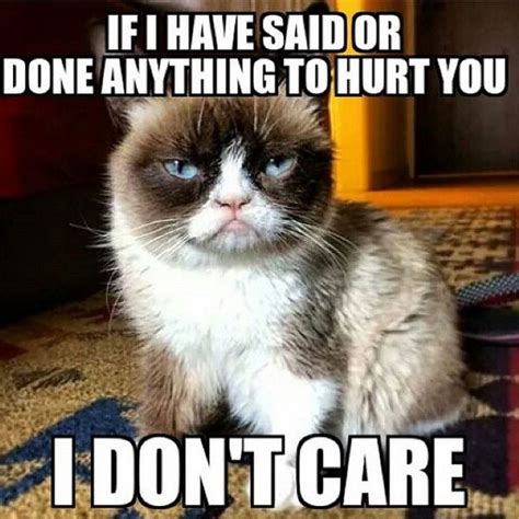 cat meme 36 cat memes that will make you laugh out loud