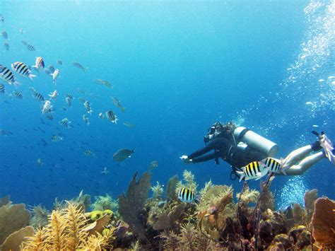 utila dive center scuba diving resource