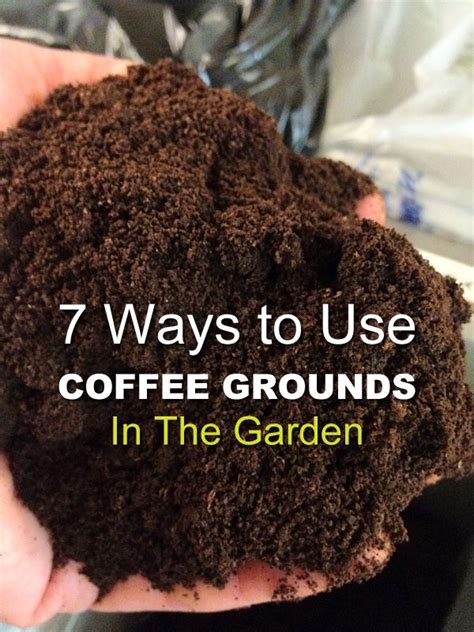 Coffee Grounds In The Vegetable Garden 899 Best Images About Habitat Garden Cultivate Grow