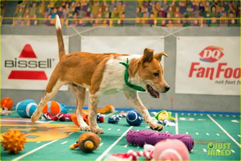 puppy bowl puppies 2017 puppy bowl 2017 meet the dogs the more photo 3853418 2017