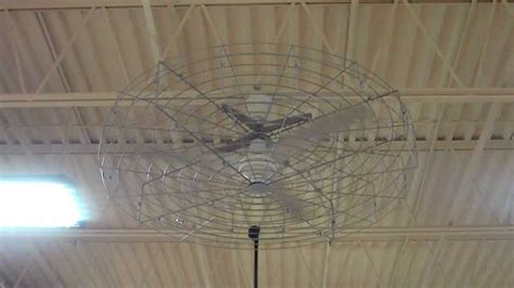 dayton industrial ceiling fan 56 quot white dayton commercial ceiling fan with a cage youtube