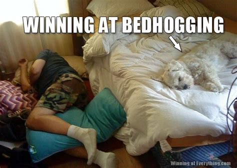 Dog In Bed Meme - dog hogging the bed