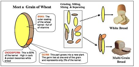 whole grains vs wheat white whole wheat whole grain breads no differences