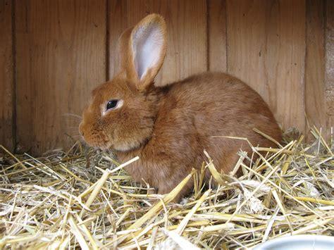 Kaninchen Im Winter Drau 223 En Halten Was Gibt Es Zu