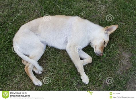 Play Dead by Play Dead Royalty Free Stock Image Cartoondealer