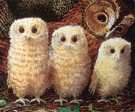owl babies my owl barn book owl babies by martin waddell