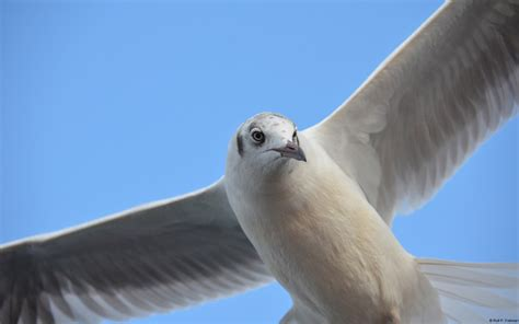 seagull windows  wallpapers hd wallpapers id