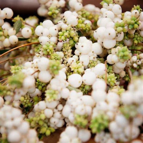 betty fiori verona betty fiori home