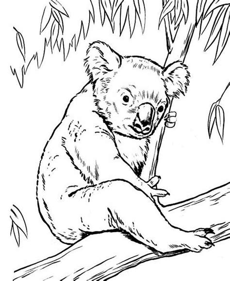 eucalyptus tree coloring page free coloring pages of emu outline