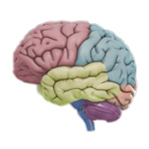 3d brain diagram best anatomy apps for android