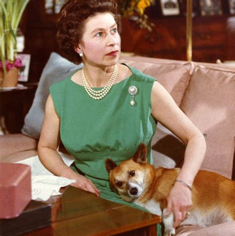 the queen s corgis behind palace doors the queen loves eastenders and isn t