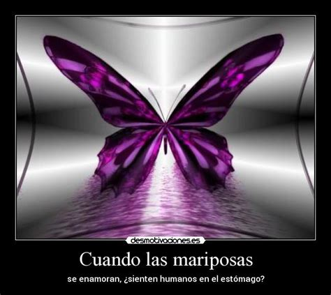 imagenes mariposas hermosas moradas www imagenes de mariposa morada imagui