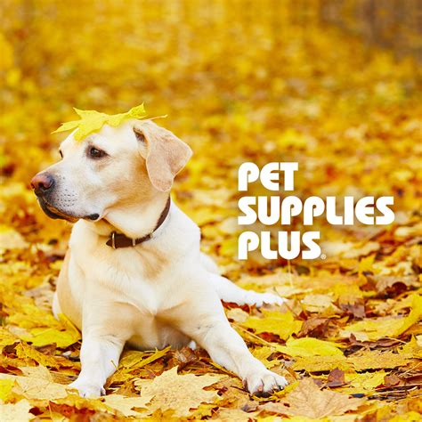 puppy plus pet supplies plus we re thankful for our pets