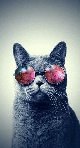 iphone wallpaper cat glasses galaxy sunglasses vintage indie hipster pinterest