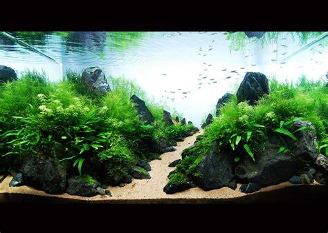 ada aquascape ada 2009 susanna aquascape garden bonsai aquascape