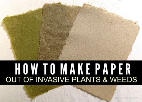 How To Make Paper Bushes - how to make paper from invasive plants