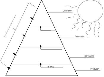 ecological pyramids worksheet answer key page 25