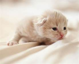 18 adorable pictures of newborn kittens