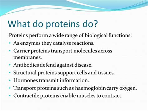 5 protein functions protein structure function ppt