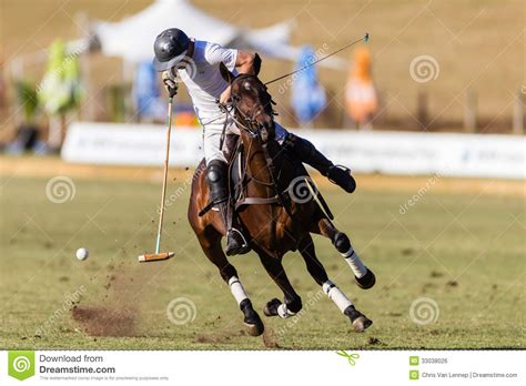 More Ponies For Polo by Polo Player Pony Editorial Photo Image 33038026