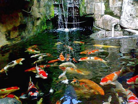 fumida garden kolam ikan minimalis