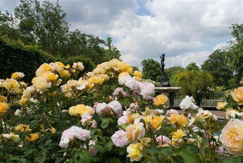 rose gardening the rose garden hyde park the royal parks
