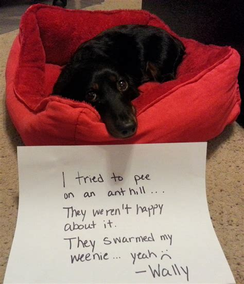 what to do with an older dog peeing in house fire ants got my weenie s weenie