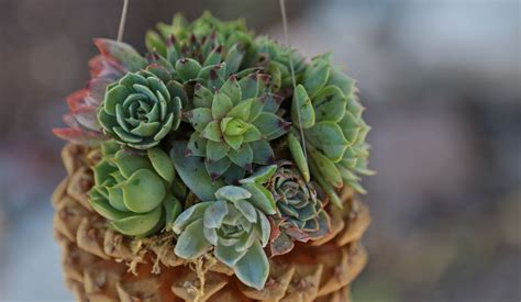 large succulent planter pine cone succulent planters cool crafts the inspired home and garden the inspired home and