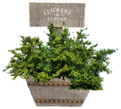 Welcome Planters by Welcome Planter Box Farmhouse Indoor Pots And Planters