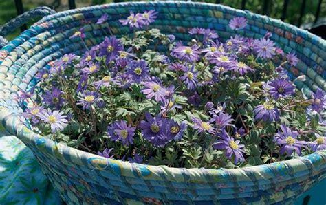 fiori da piantare in autunno bulbi da piantare in autunno quali scegliere e come fare