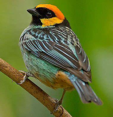 peru wildlife birds