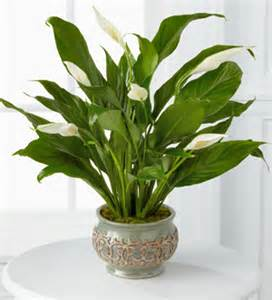 plants for indoors indoor gardening potted plant ideas interior design